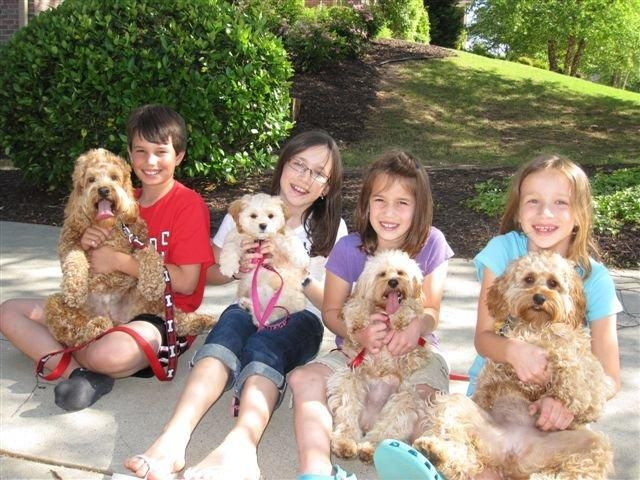 Acura Cockapoos Columbia Sc Cockapoo Puppies For Sale Cockapoo Puppies Cockapoo Puppies For Sale Cockapoo