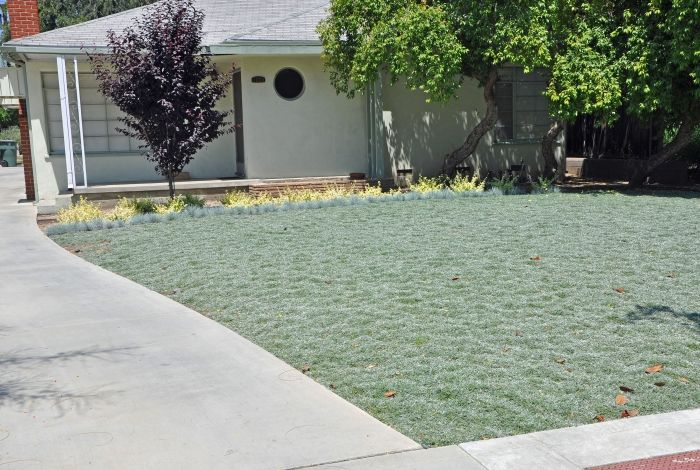 Simple Landscape Ideas Front Yard Curb Appeal