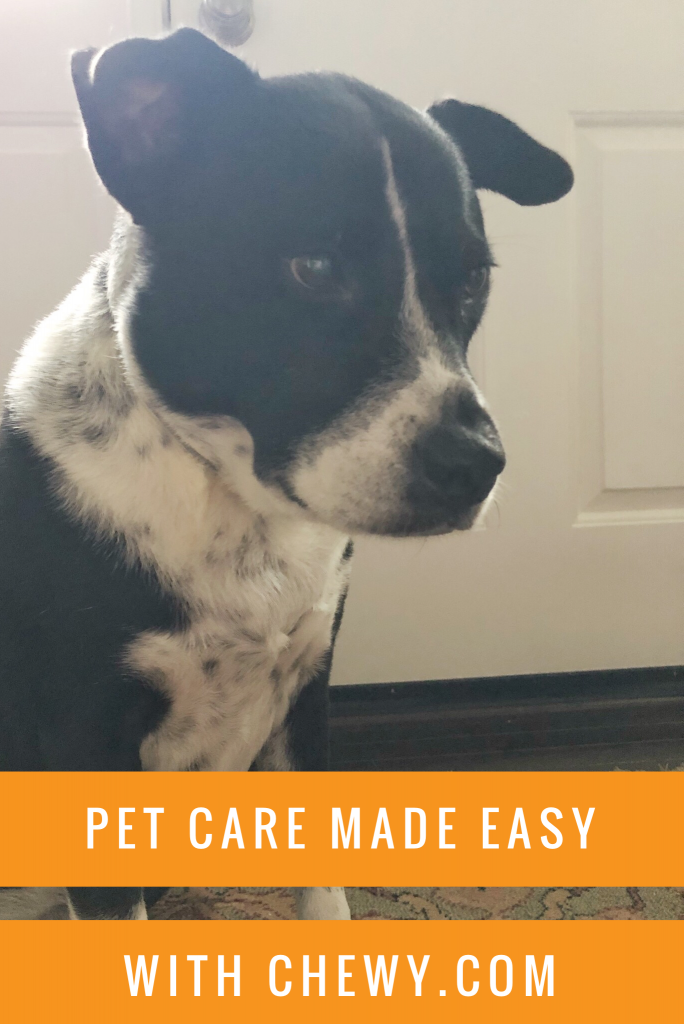 Pet Care Made Easier With Chewy Com With Images Embrace Pet