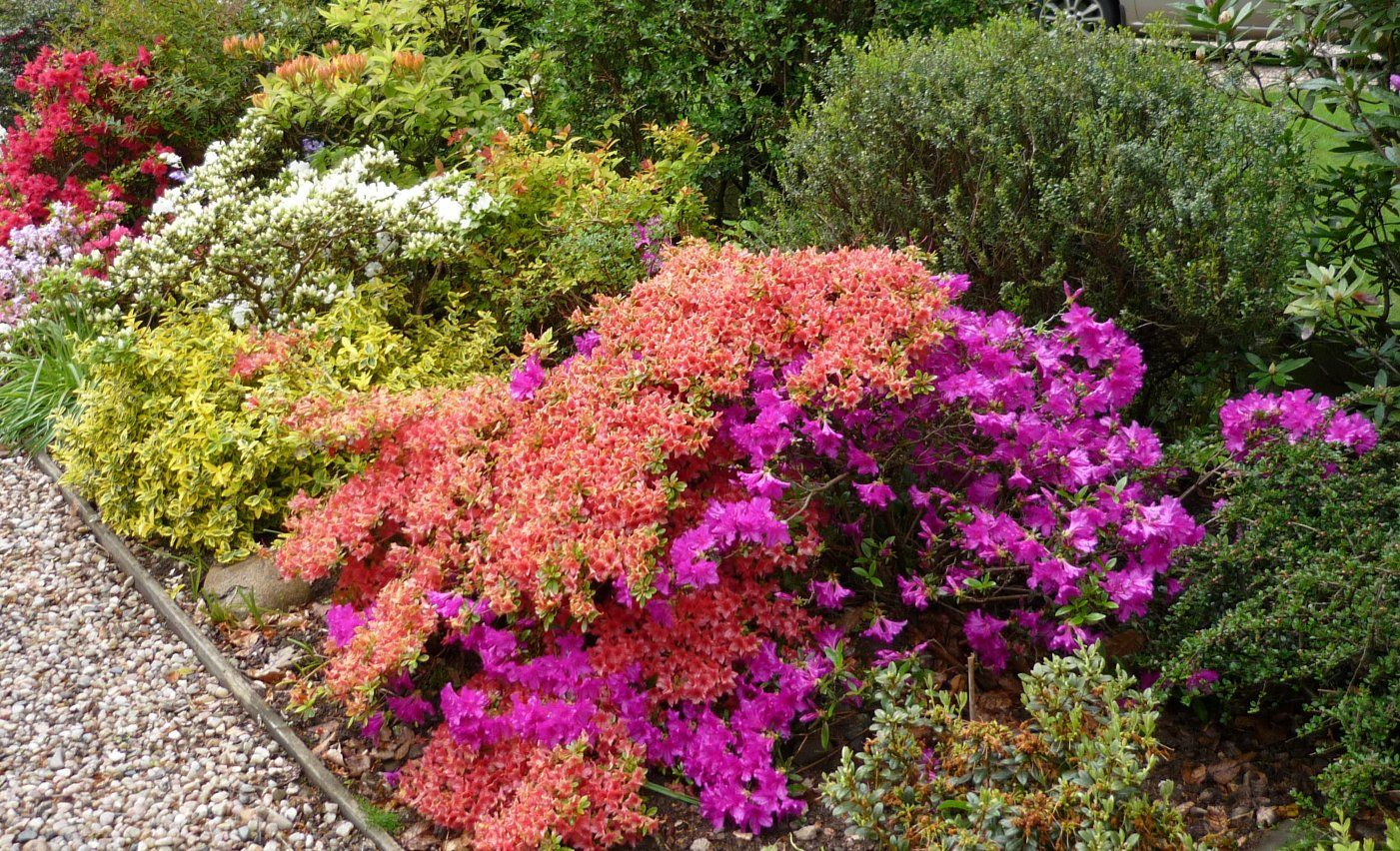 Low maintenance shrubs low maintenance shrubs for for Low maintenance flowers outdoor