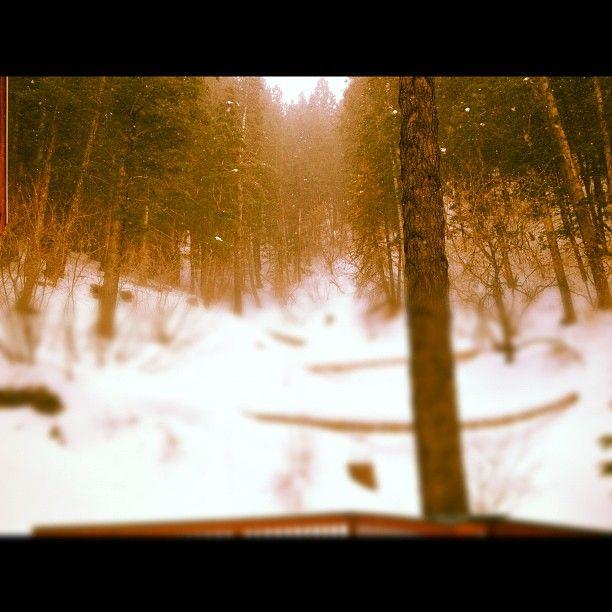 my trees. love.
