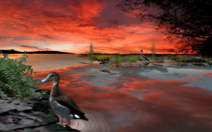 Three Ducks - Patrick's - Paintings & Prints Landscapes & Nature Lakes & Ponds… | ArtPal thumbnail