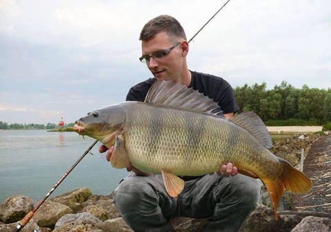 Carp perch hybrid - is this within the realms of possibility!?
