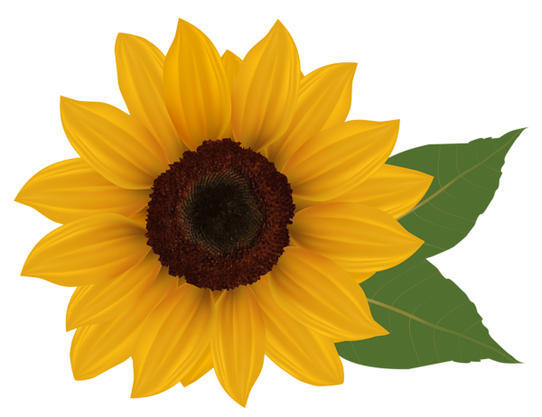 Sunflower PNG Clipart Picture | Crafts | Pinterest ...