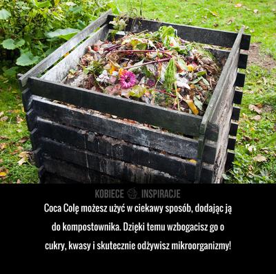 Coca Colę możesz użyć w ciekawy sposób, dodając ją do kompostownika. Dzięki temu wzbogacisz go o cukry, kwasy i skutecznie ...