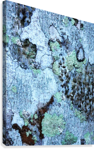 Aussie Gum Tree Bark 12 Lexa Harpell Canvas Artwork In 2020