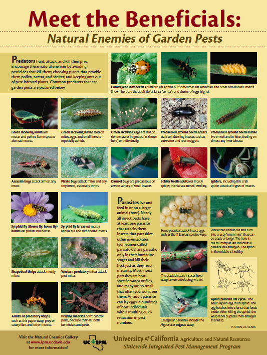 Uc Ipm Poster Natural Enemies Of Plant Pests Garden Pests Plant Pests Garden Insects