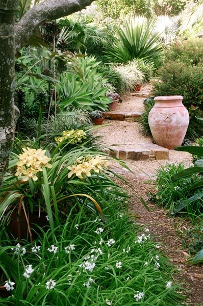 Nevell Garden Coffs Harbour Garden Expressions Landscape Design For Residential Commercial An Small Gardens Backyard Landscaping Landscaping Around Trees