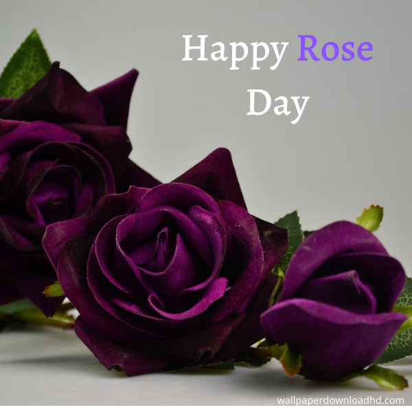 happy rose day images in 2020 Happy rose day wallpaper