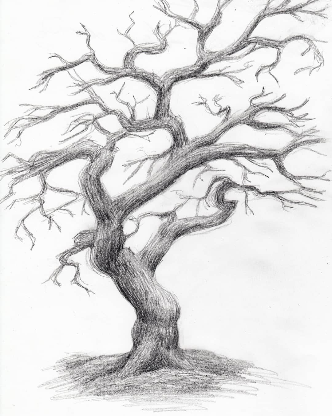 How To Drawing 51 Images With How To Drawings A Tree Easy Pictures Page 23 Of 48 Drawing Sketch Blog Tree Drawings Pencil Tree Drawing Simple Tree Drawing