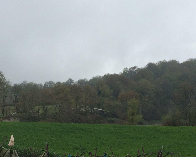 sky trees land