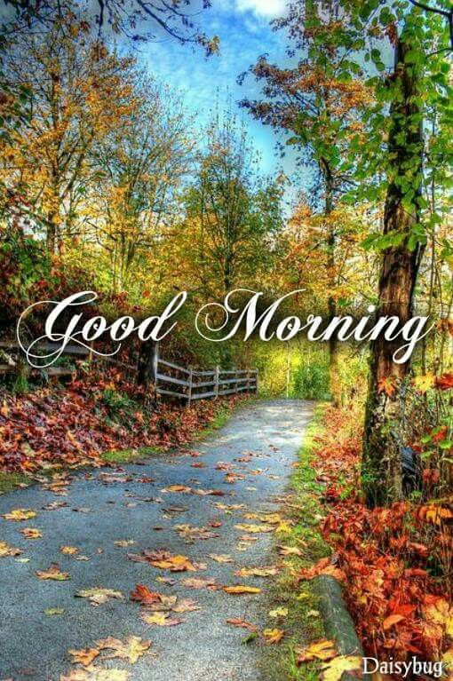 Me And Buddy Are Heading Out For A Walk Later Good Morning Quotes Morning Pictures Good Morning Handsome
