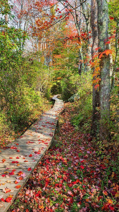 Paul Landry Co. Mood | Paul Landry, preppy, coast, mood board, vacation, autumn, mood, New England, fall, style, coastal, aesthetic