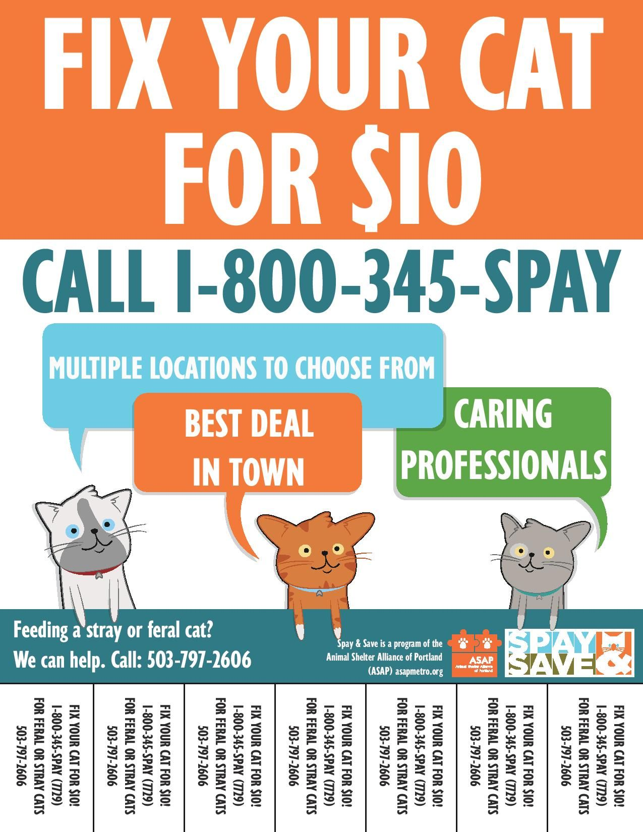 Lowcost spay and neuter services for felines throughout