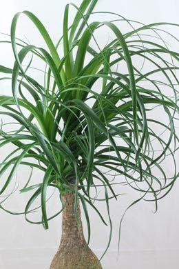 kakteen sukkulenten zimmerpflanzen pflege b ume und str ucher pinterest zimmerpflanzen. Black Bedroom Furniture Sets. Home Design Ideas