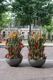 Image result for strelitzia floral installations