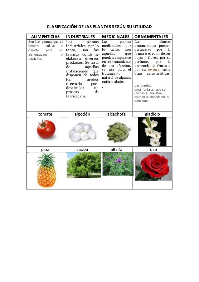 Clasificación De Las Plantas Según Su Utilidad Alimenticias