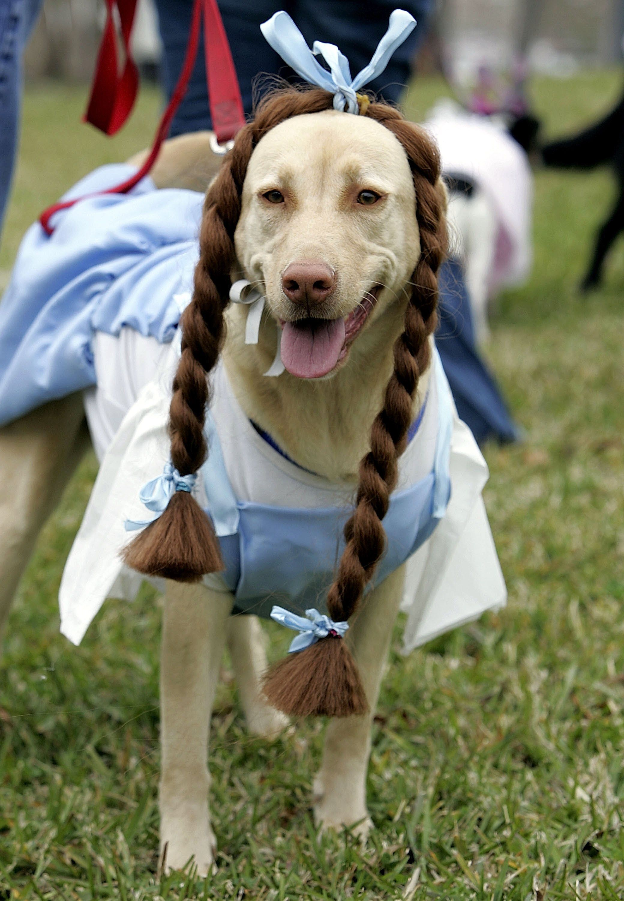 How To Throw The Best Ever Dog Birthday Party Pet Costumes Dog