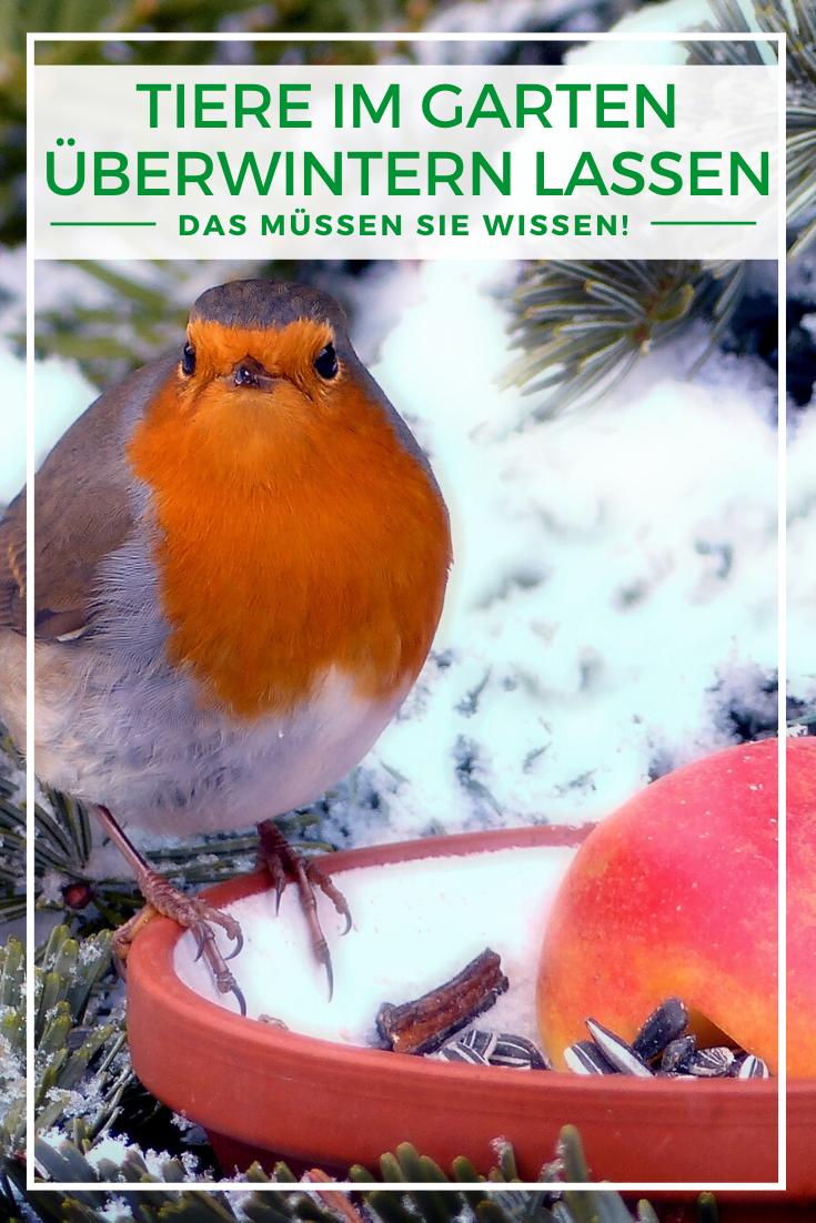 Heimische Tiere Im Garten Uberwintern Lassen Vogel Im Garten Igel Im Garten Tiere