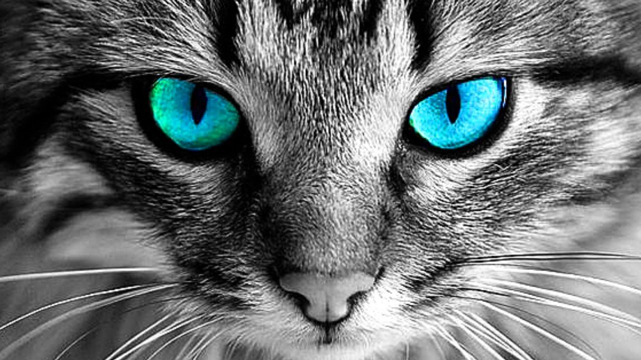 Why You Should Never Look Into Cats Eyes Cute Cats Tabby Cat Dog Cat