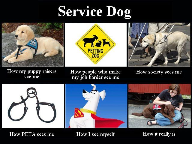 Service Dogs I Like This Take On That Whole What I Do Meme