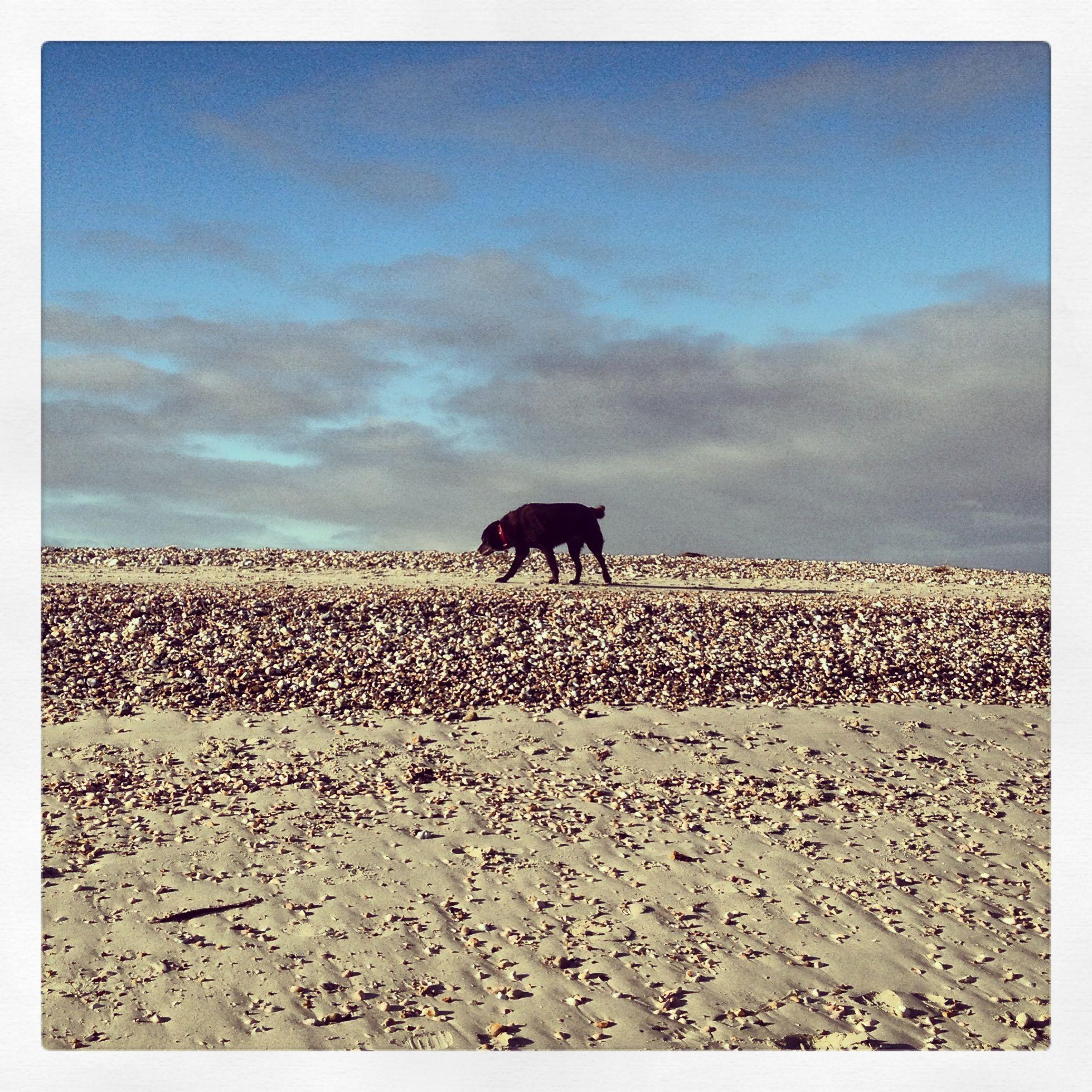 A little lone dog