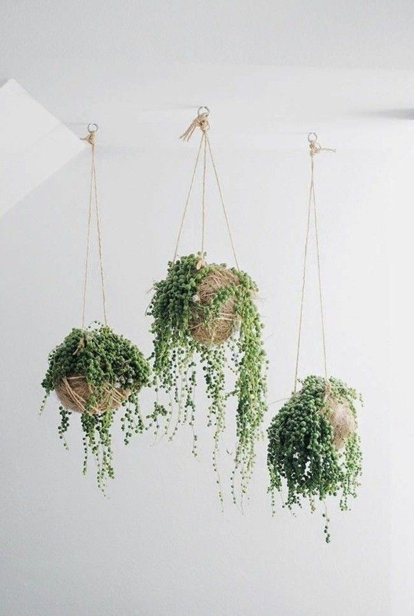 Plantes d 39 int rieur plantes suspendues deco id es ampel for Pot plantes interieur