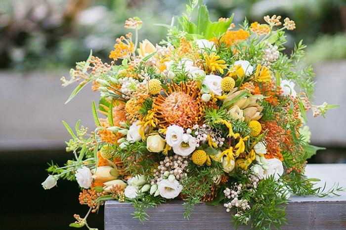 Blume des Monats November: die Nadelkissen Protea