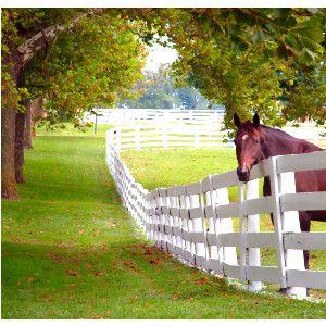 Rooksford Kentucky--Small Town, Big Dreams | Horses | Pinterest ...