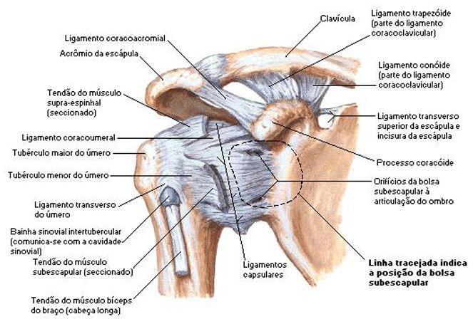 Lesoes Do Ombro E O Famoso Protocolo De Fortalecimento