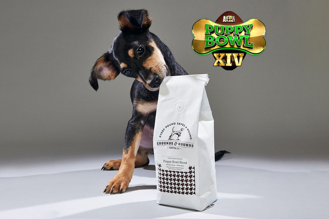 The Puppy Bowl Now Has An Official Coffee Puppy bowls