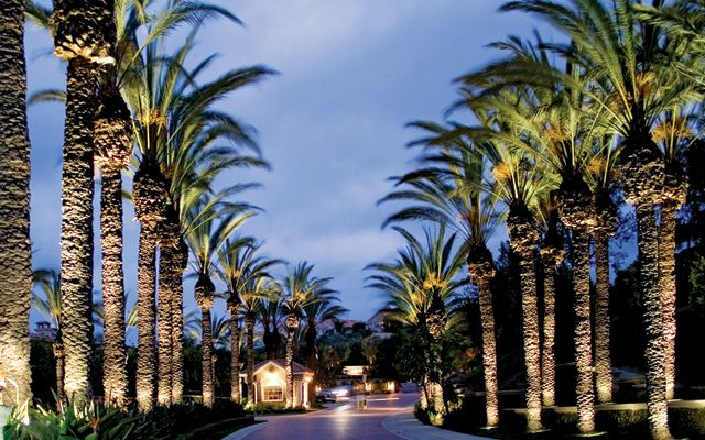 Palm tree lighting commercial street lighting pinterest rope palm tree lighting mozeypictures Choice Image