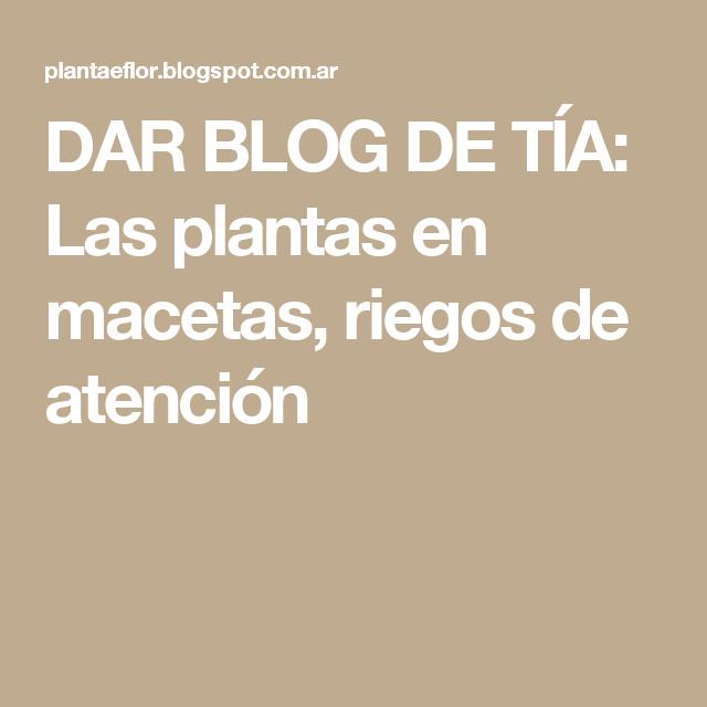 DAR BLOG DE TÍA: Las plantas en macetas, riegos de atención