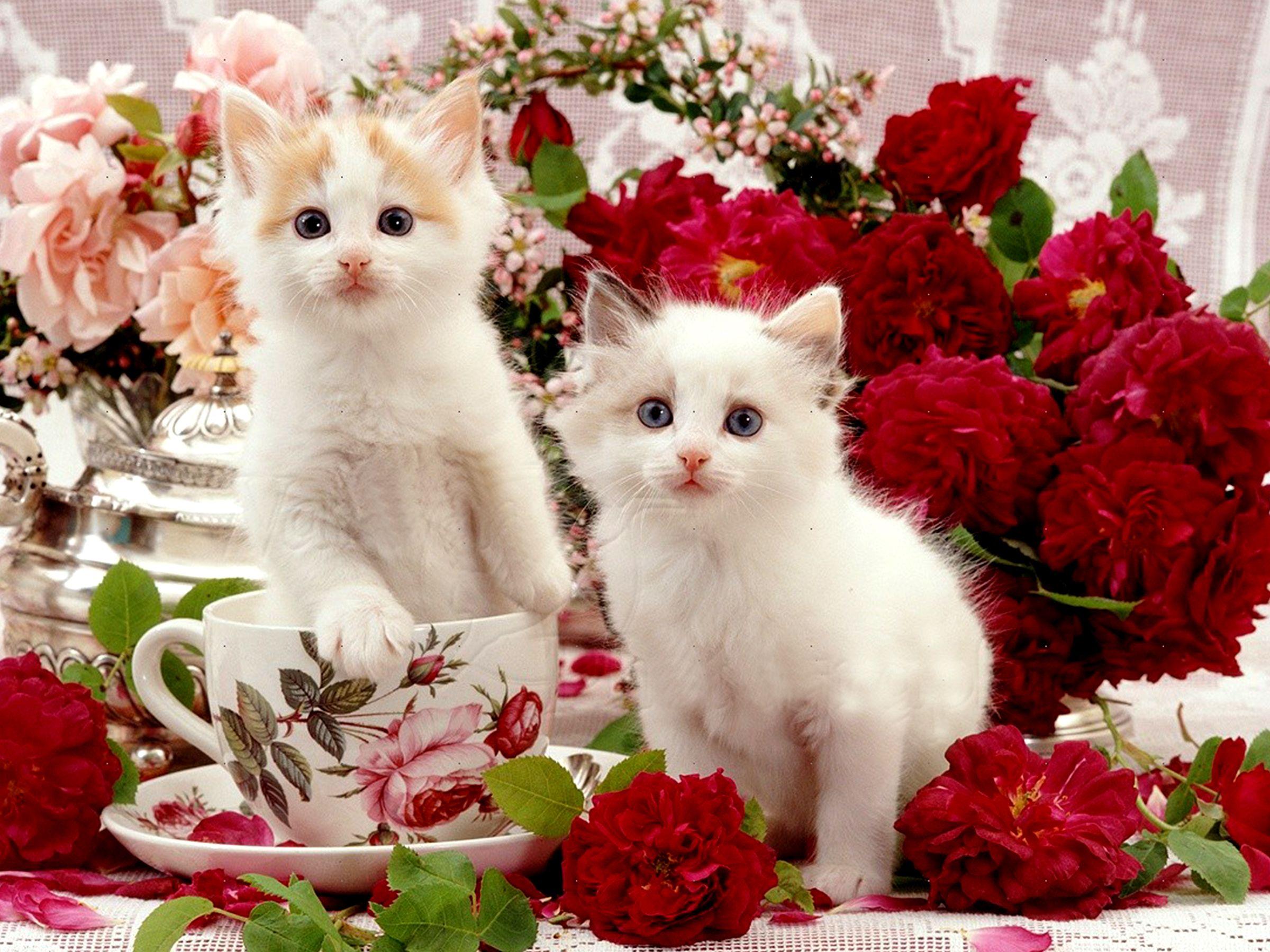 Pin by tatiana mccat on cats baby cats beautiful - Cute kitten wallpaper free download ...