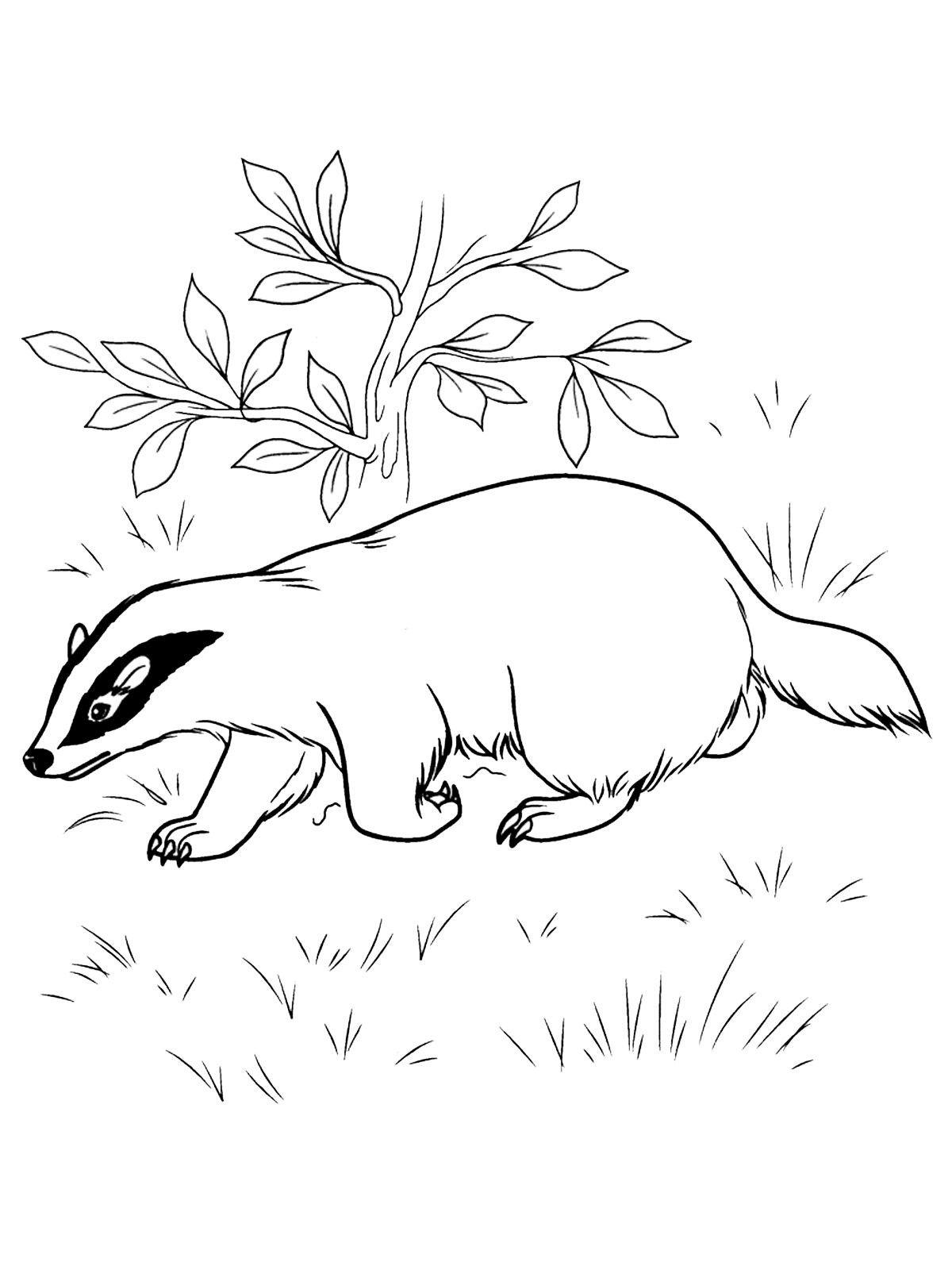 Bosdieren Bosdieren Dieren Tekenen
