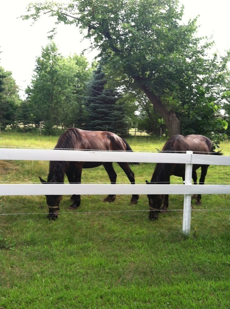 They love the pasture.