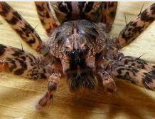 My friends even keeping a tarantula, why?.