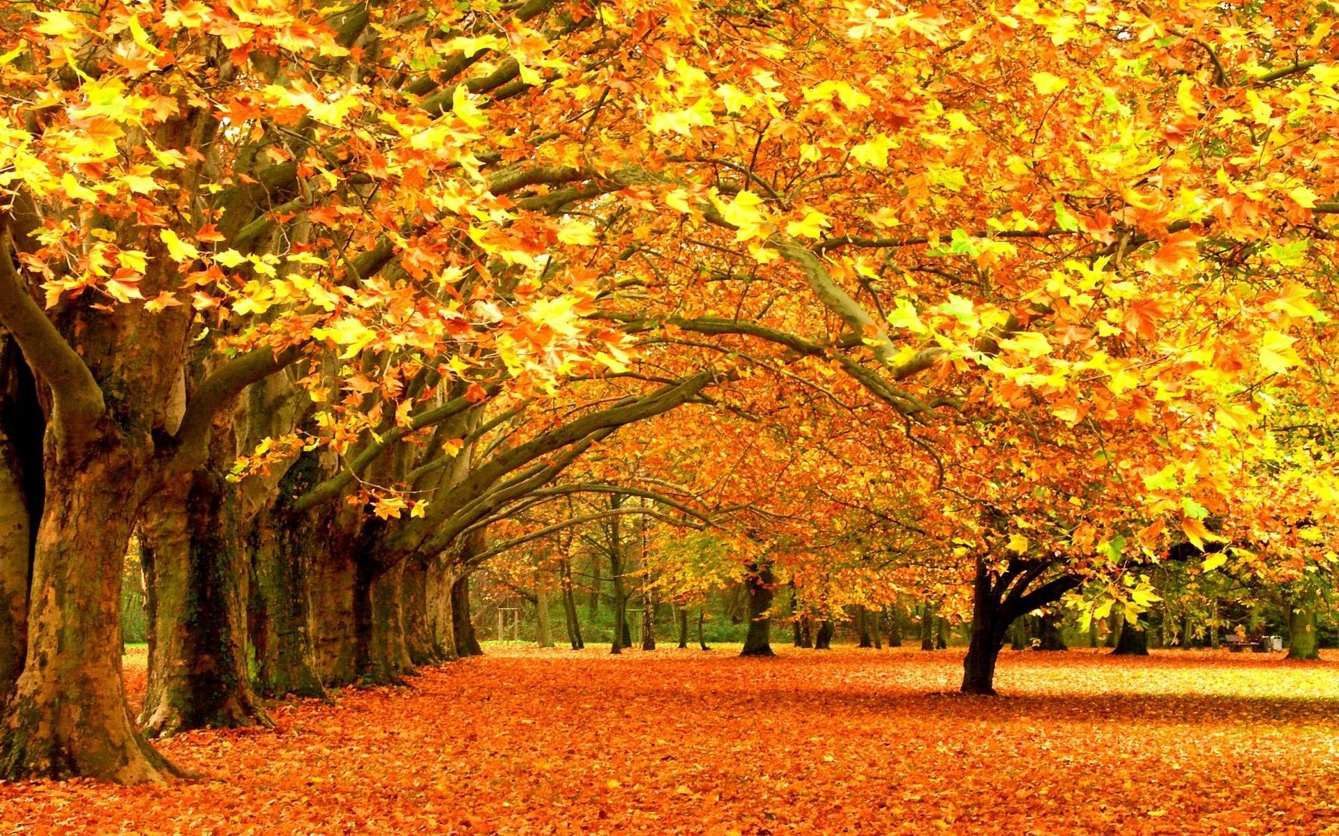 Fall Foliage Wallpaper Hd Autumn Scenery Autumn Scenes Autumn Nature
