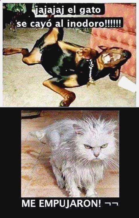 O Descubre Lo Mejor En Como Hacer Gifs Desde Youtube Gifs Animados Fuego Memes Graciosos De Zom Chistes De Perros Humor Divertido Sobre Animales Meme Gato