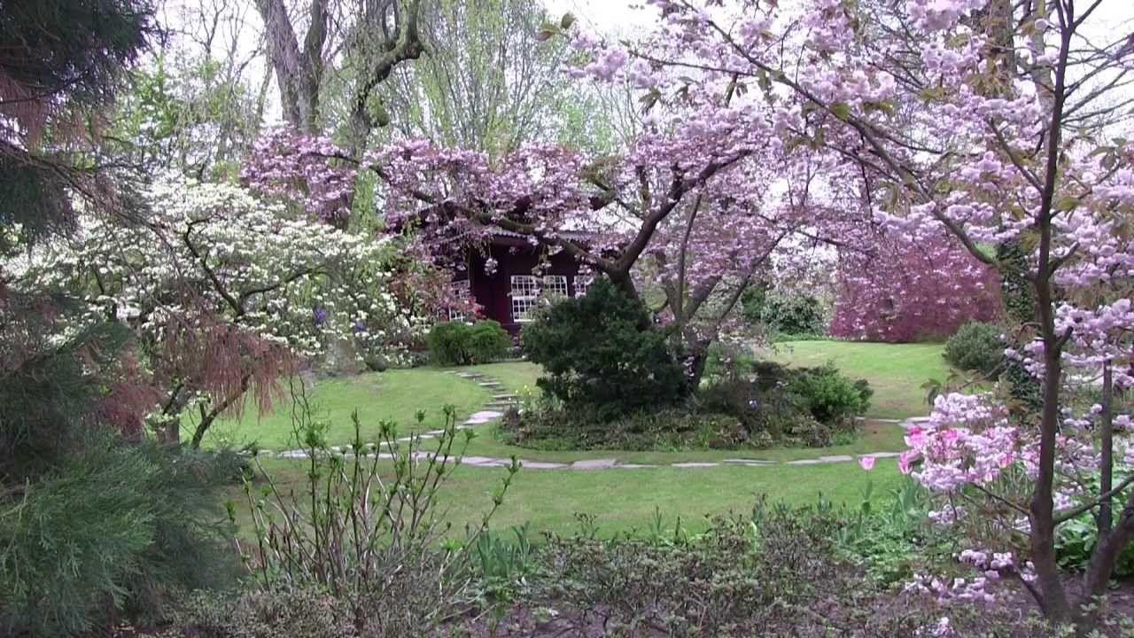 Fresh  Cherry Blossom Japanese Garden japanischer Garten