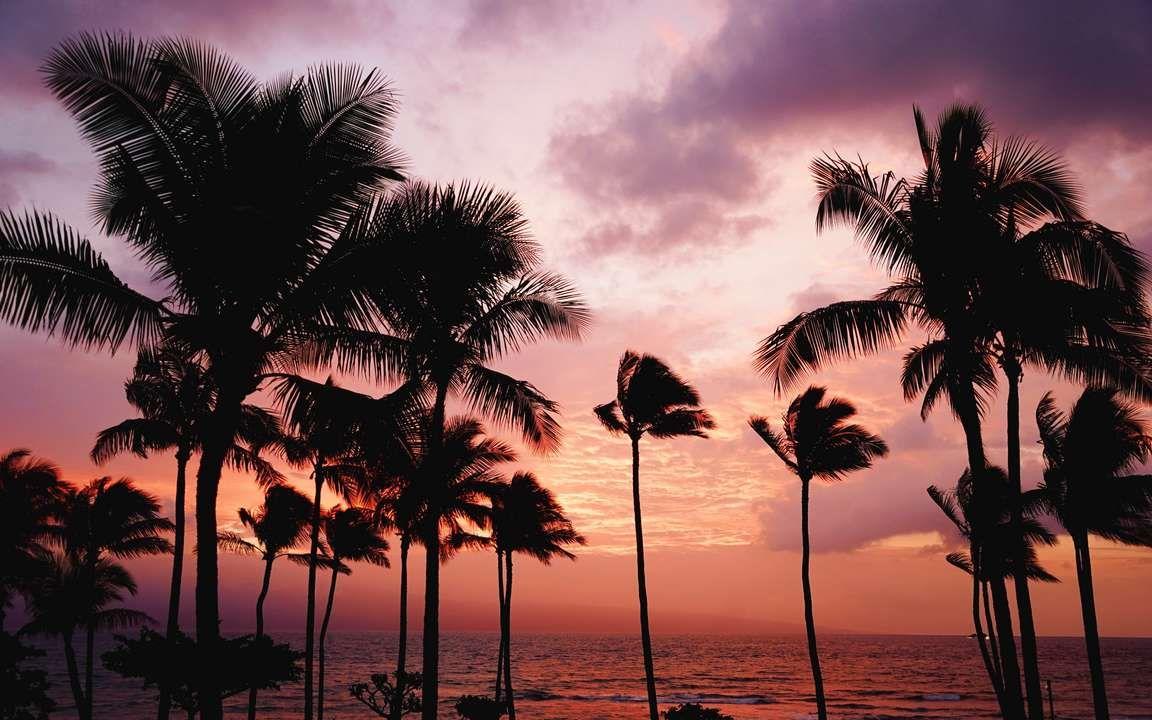 Download Wallpaper 3840x2400 Palm Trees Sunset Sea 4k Ultra Hd