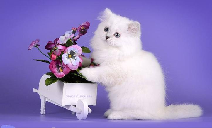Pin von fleuriste auf nos petits chien & chats Katzen