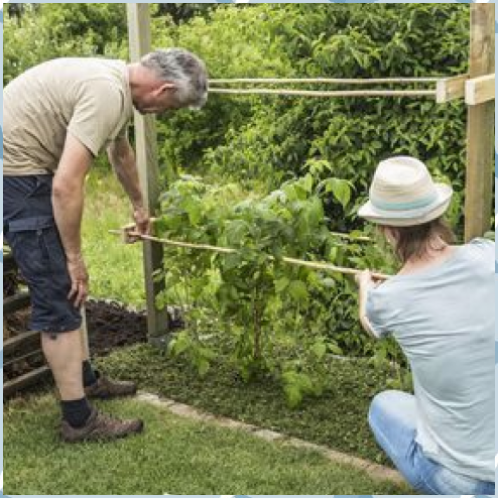 Build Climbing Aid For Raspberries Yourself Category Build Climbing Aid For Raspberries Yourself Ca Garden Projects Gardening Tips Diy Garden Projects