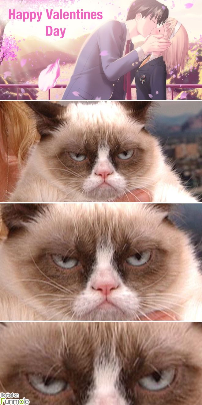 grumpy cat grumpy cat hates valentines day funmole - Grumpy Cat Valentine