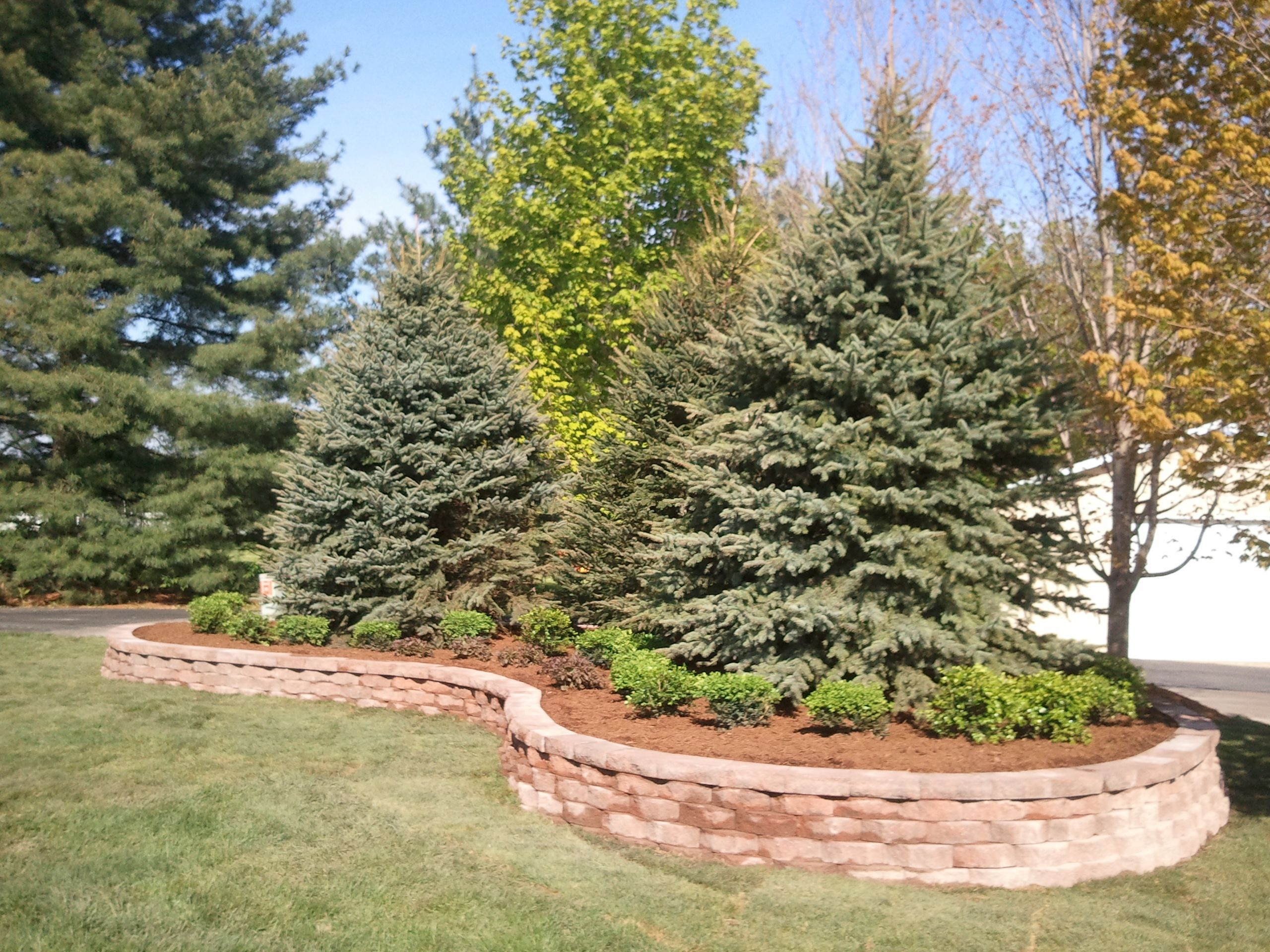 Raised Landscape Bed Large Colorado Blue Spruce Tree 400 x 300