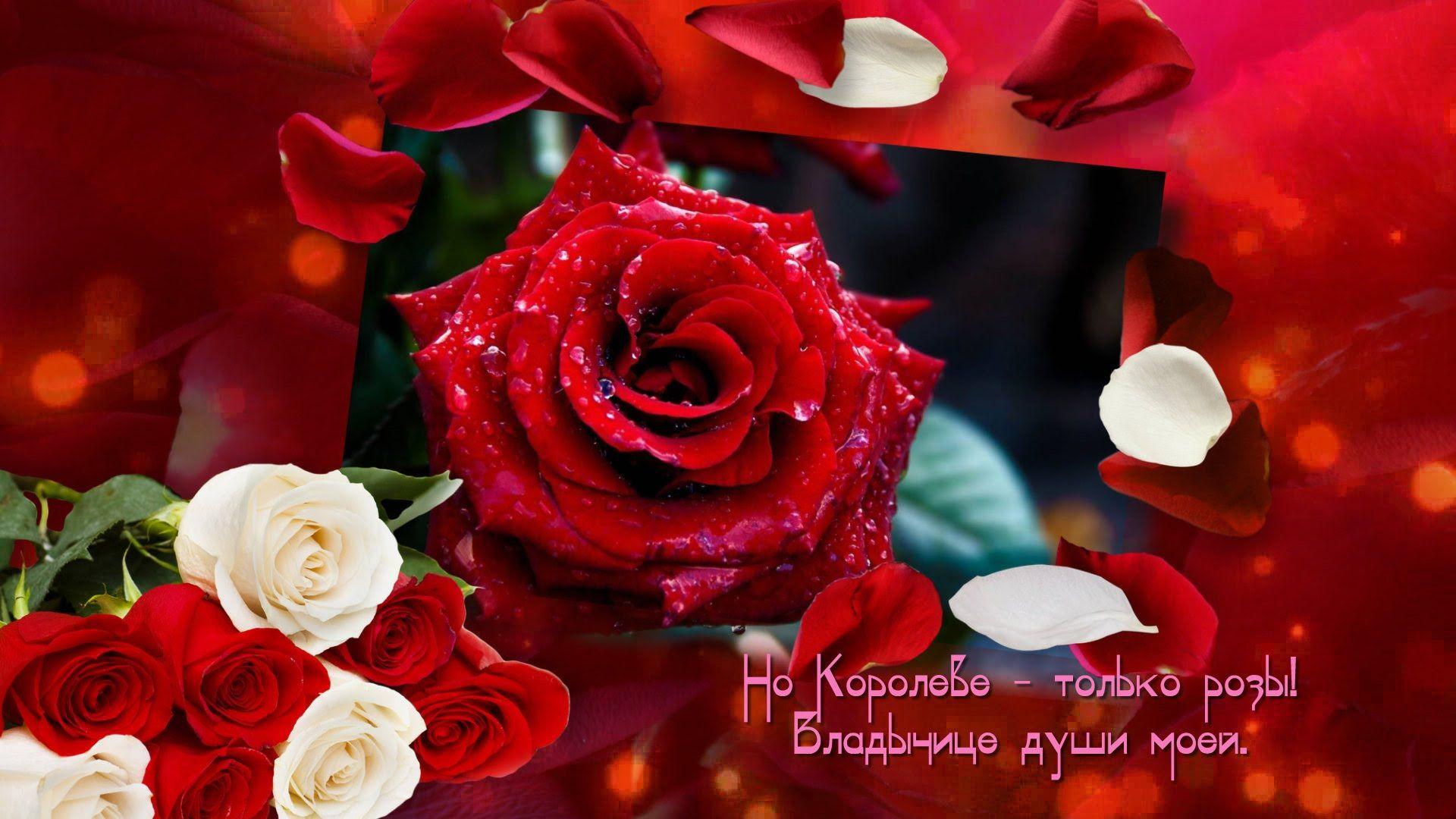 поздравление королева цветов знає кожна