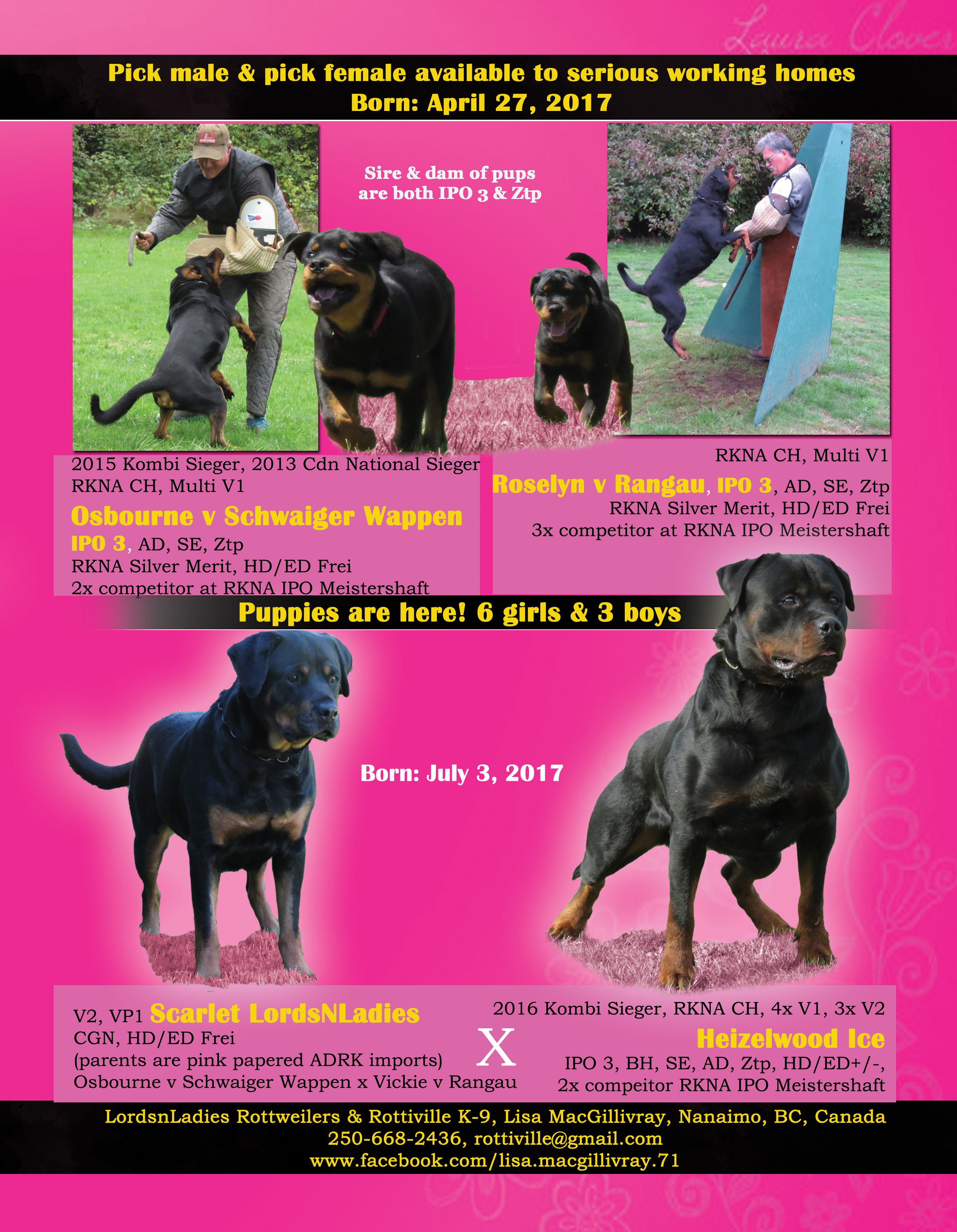 Lordsnladies Rottweilers Rottiville K 9 Lisa Macgillivray Nanaimo Bc Canada 250 668 2436 Rottiville Gmail Com Www Face Rottweiler Breed Rottweiler Stud Dog