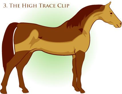 High Trace Clip Suitable For Horses In Light To Medium