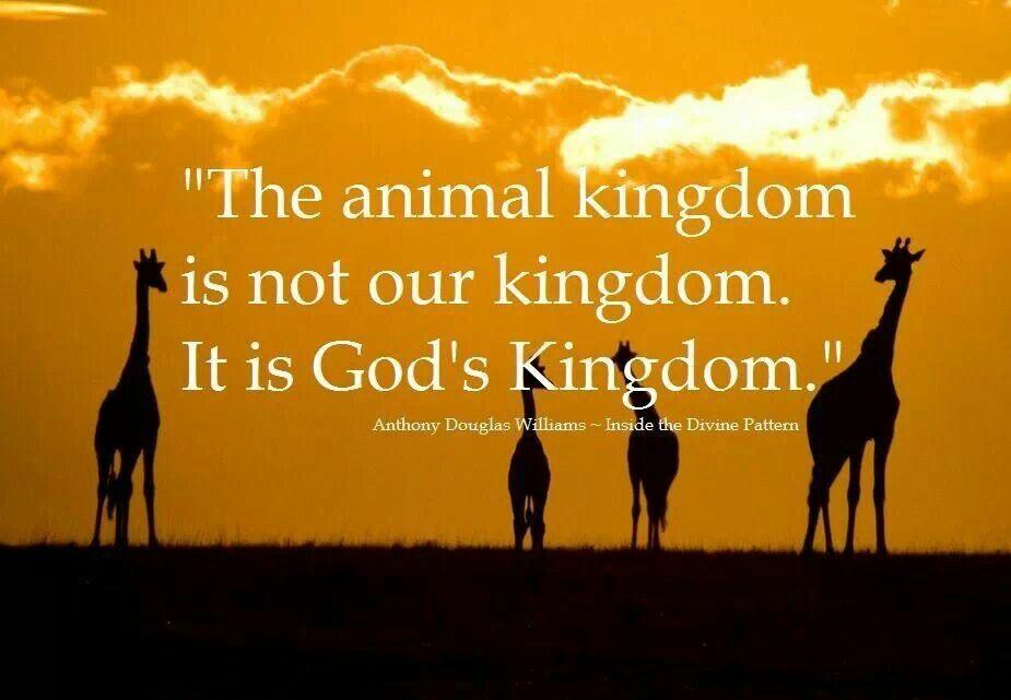 Absolutely Animal Quotes Animal Kingdom Animals