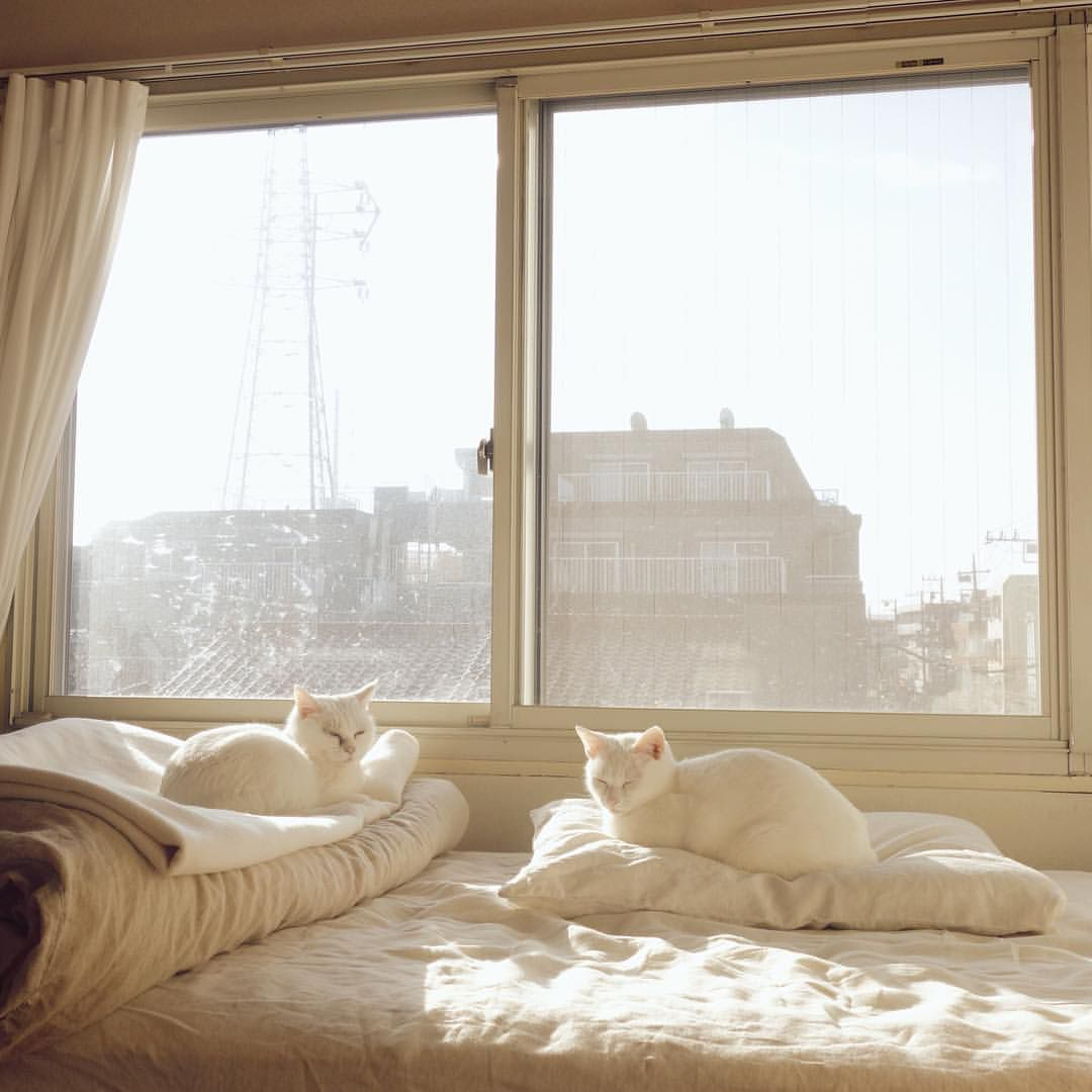Window bed for cats  pin by fabric outlook on inspiration  pinterest  interiors cat